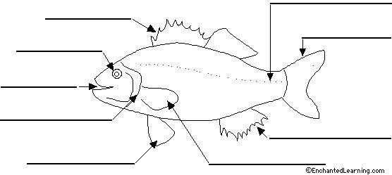 Fish Diagram To Label