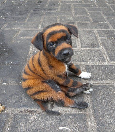 I hope they don't paint on this puppy