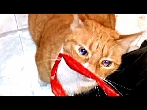 Kitten Eyes Change Color Multiple Times During A Bag Attack Kitten Eyes Eye Color Change Kitten