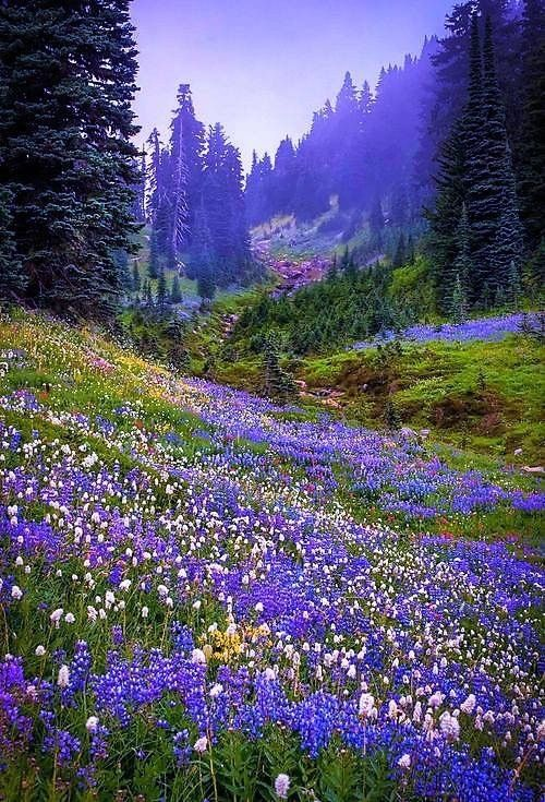 Blue And Purple Fields And Forests Eco Baby Babycare Green Natural Inspire Mother Mothernature Landscap With Images Landscape Nature Pictures Beautiful Nature