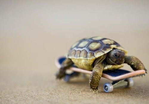What can I say!.... I was in a hurry: Worksmarter, So Cute, Funny Stuff, Cute Animals, Continual Progress, Inspirational Quotes, Work Smarter, Baby Turtles, Funnie