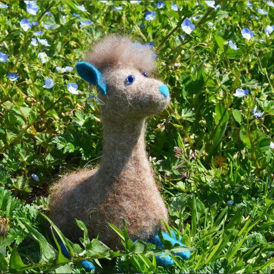 Gut getarnt zwischen blauen Wiesenblumen sitzt ein Alpaka und träumt von der großen Welt.