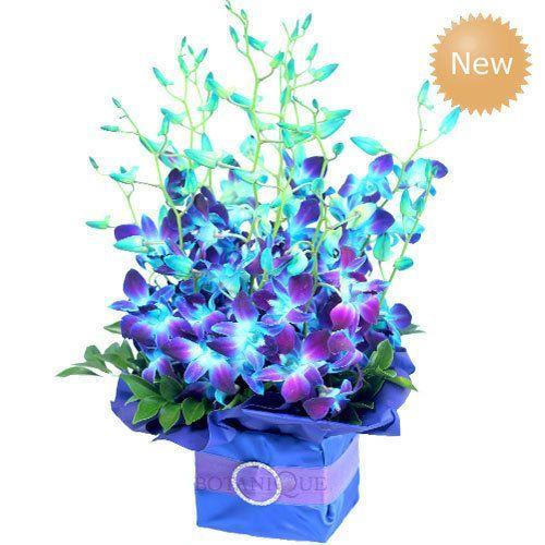 Diamond Galaxy Blueblue Diamond Galaxy Buy Flowers Online Blue Orchid Flower Purple Orchids