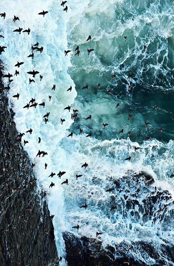 .sea birds: