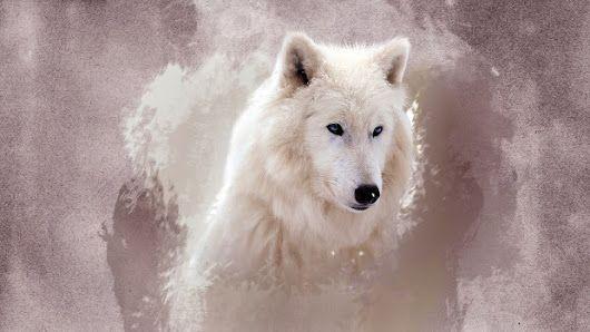 Epingle Par Les Pas De La Pleine Lune Sur Loup Creation Montage Animaux Loup Loup Blanc