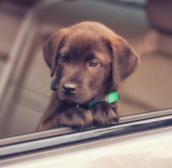 10 choses à savoir absolument avant d'adopter ton premier chien