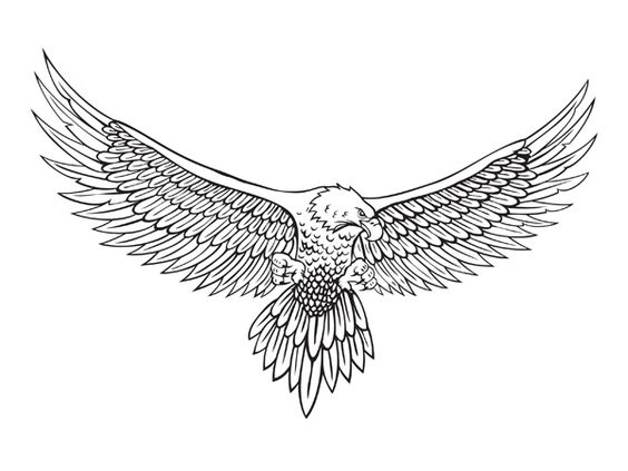 D Line Drawings Locations : D line art eagle drawing vector material
