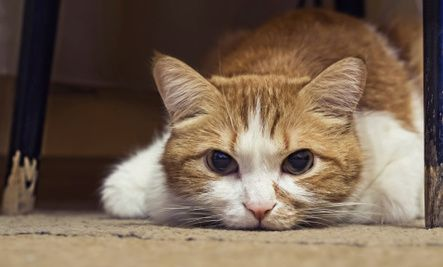 7 Signs Your Cat May Be Sick