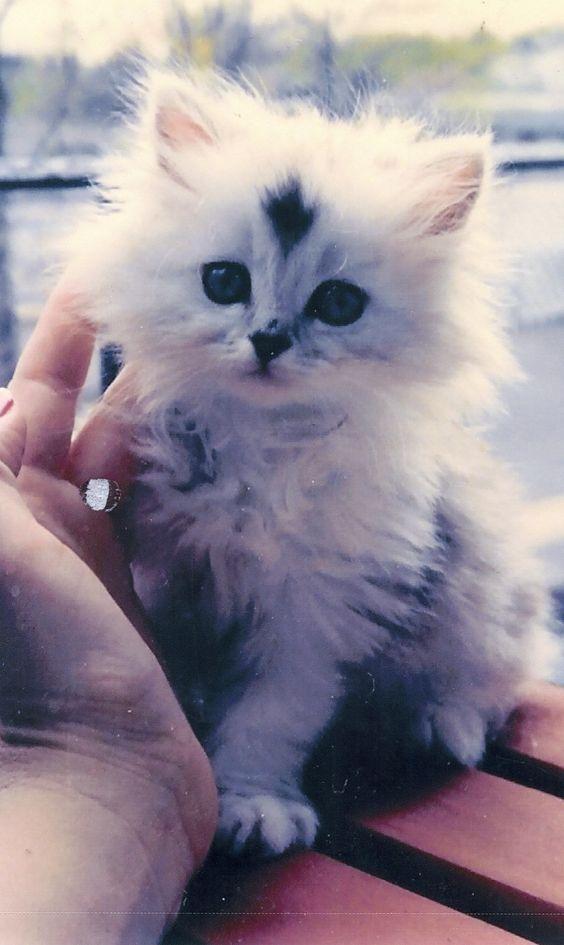 What An Adorable Little Kitten Cuteness Overload