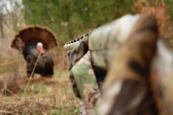 Turkey Hunting!!                                                       …
