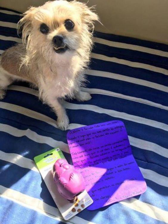 A cachorra comeu o cartão de seu tutor e recebeu uma surpresinha.  Foto: Reprodução/Facebook