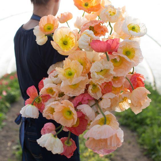 https://i.pinimg.com/564x/f9/88/20/f98820b4fa3859b0a28338c65b61299a--backyard-flowers-garden-poppies-flower-garden.jpg