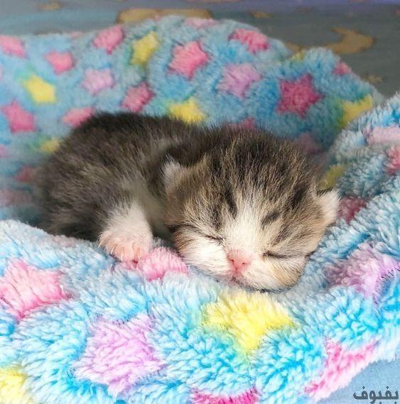 صور قطط صغيرة أجمل صور القطط الصغيرة في غاية الجمال بفبوف Kittens Cutest Baby Cats Cute Baby Animals