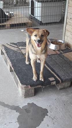 Tiere In Not Seite Hunde Aus Rumanien Hunde Tiere In Not