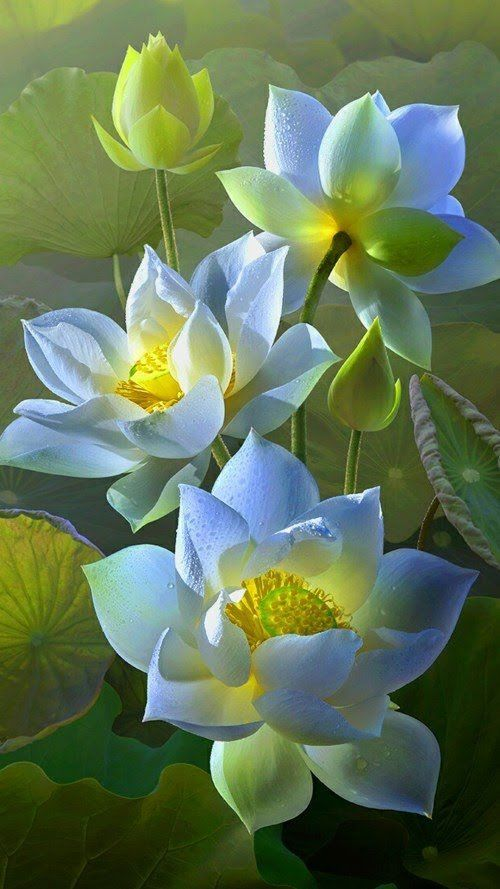 High Quality Samsung Galaxy Flower Wallpaper