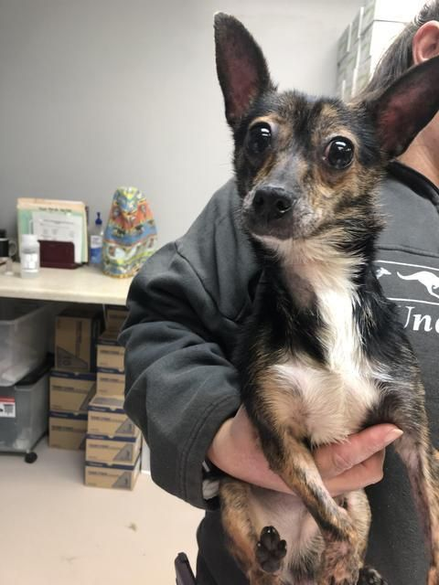 Adopt Bullet On Dog Adoption Help Homeless Pets Homeless Pets