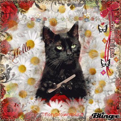 Image result for cat celebrating birthday gif