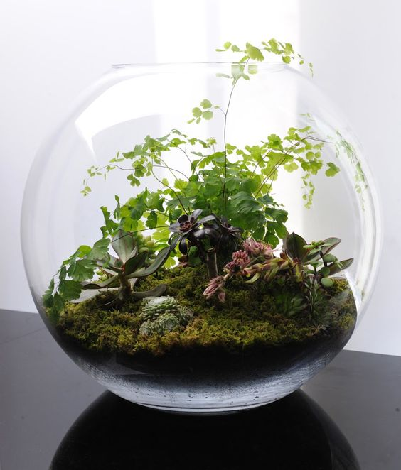 Terrariums fish bowl gardening gardens glass fish bowl for Growing plants with fish