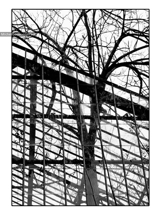 Overgrown Chaos :: Fine Art Urban Photography Print For Sale — An intriguing black and white photography composition showing a tree overgrowing a neglected greenhouse.