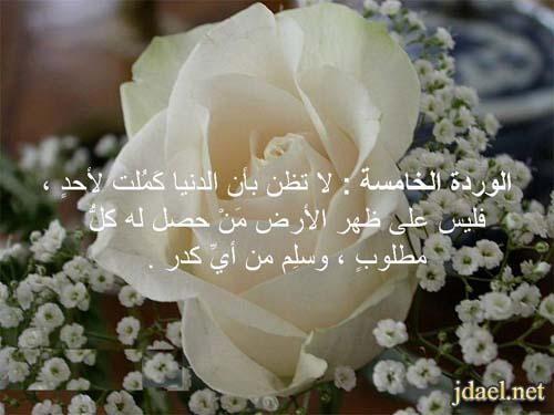 الورود العشرة للدكتور عائض القرني باقة الورد واجمل الكلام بالصور Rose Flowers Plants
