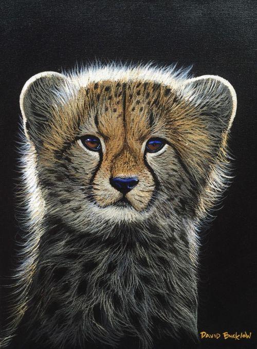 Fuzzball - Baby Cheetah by David Bucklow | Wildlife Art Artwork | Fine Art Portfolio