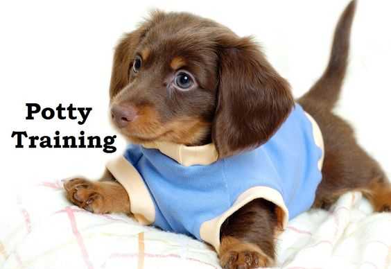 how to train a puppy video