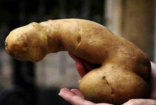 Bilderesultat for perverted vegetables
