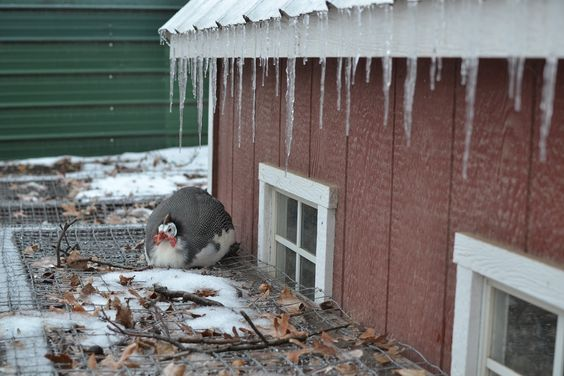Our Neck of the Woods: Feathered Friend Friday: Winter Weary.