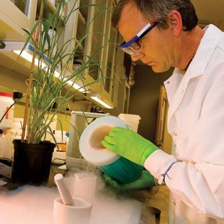 Biofuels Research:  The focus of the Noble Foundation's bioenergy feedstock work is on switchgrass.
