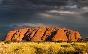 Bildergebnis für bäume australien