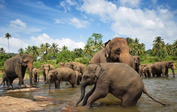 Sri Lanka en famille avec enfants : l'avis du blog Voyage Family ! - VOYAGE FAMILY