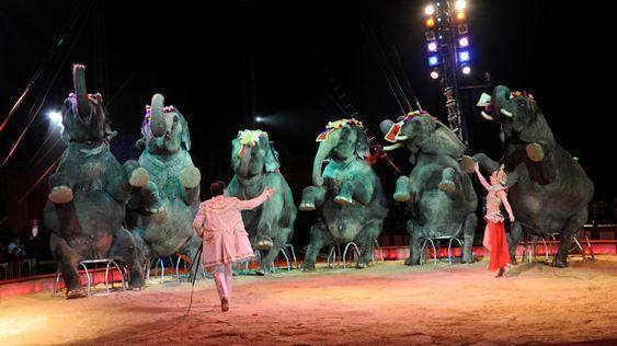 circus elephants   imm...