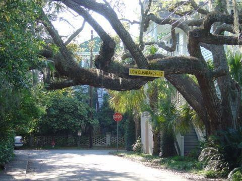 Image result for the hanging tree charleston sc