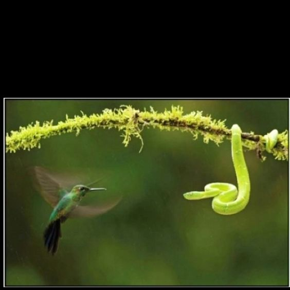 Love Hummingbirds.
