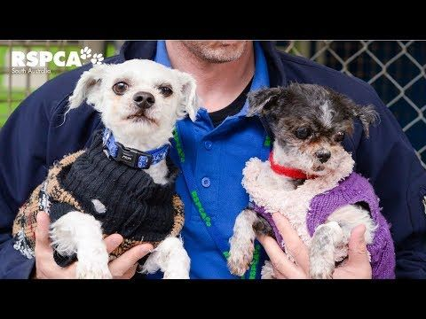 Two Dogs Seized With Severely Matted Coats Are So Happy Now