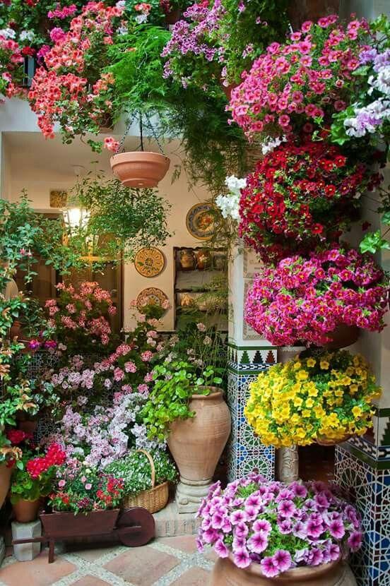 flores esculturas plantas plantas flores jardines flores hermoso patios y jardines macetas grande ambos terrazas pixeles consejos guays
