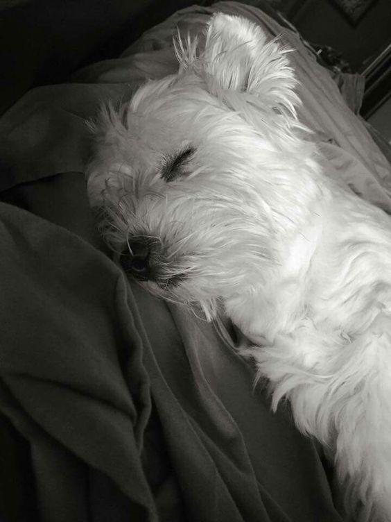 Sleepy Time❤❤❤: