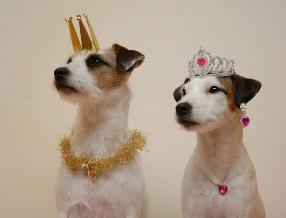 Image result for ROYAL DOGS