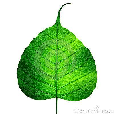 Bodhi Tree Leaf  S&246k P&229 Google Piercing/Tattoo