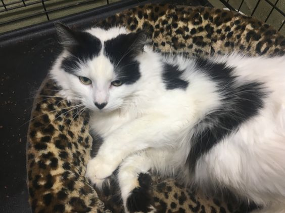 Adopt Seymour Petsmart On Petfinder Cat Adoption Poor Dog Pet Adoption