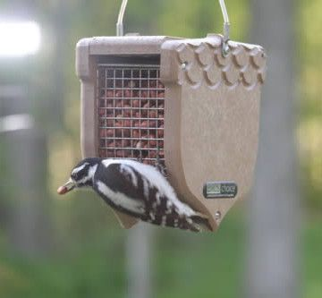 Recycled Shelled Peanut Feeder