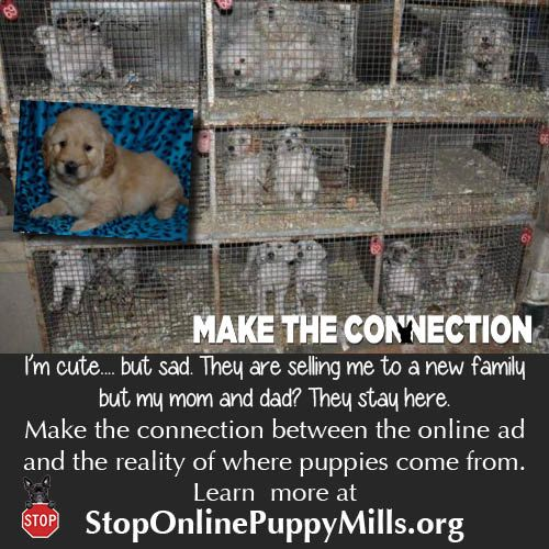 Help your dog loving friends understand the true horror of the puppy mill industry. Get the facts at http://www.stoponlinepuppymills.org/make-the-connection/