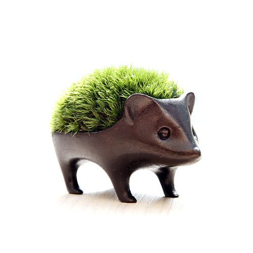 hedgehog moss or grass planter - Boo! I cannot read the site to order one.