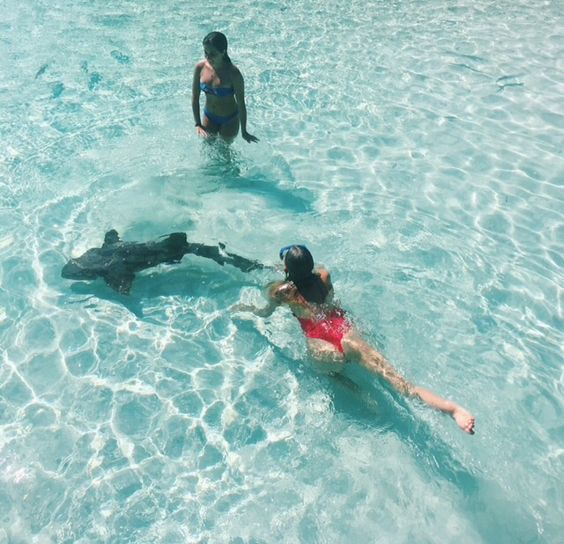 Swimming with nurse sharks in Compass Cay