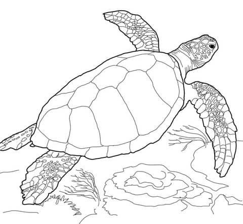 Sea Turtle Coloring Page Dwcp Loggerhead Sea Turtle Coloring Page