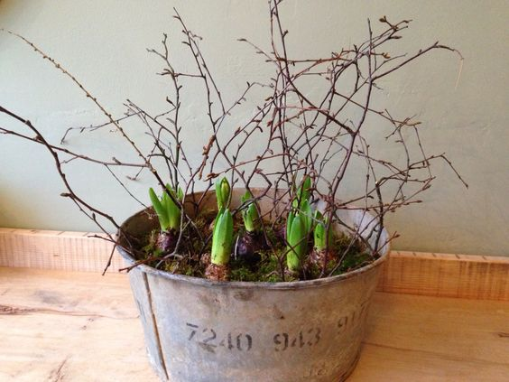 Hyacinth and birch in a zinc planter .