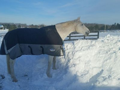 Does your horse need a blanket?  http://www.proequinegrooms.com/index.php/tips/grooming/to-blanket-or-not-to-blanket/