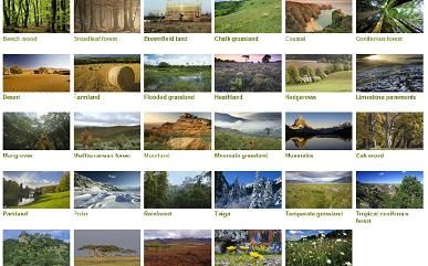 5 type of habitats pictures to pin on pinterest pinsdaddy for Code habitat