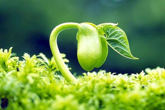 Bổ sung estrogen từ mầm đậu nành là giải pháp tự nhiên và an toàn