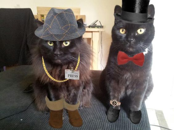 Dressed up cats